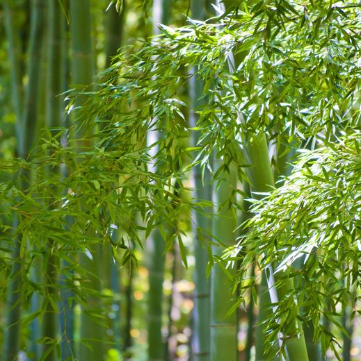 静岡産 竹粉