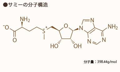 サミーの分子構造