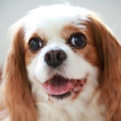 サプリで愛犬の心臓ケア
