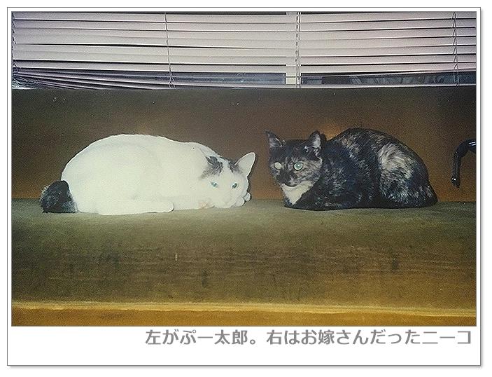 左がぷー太郎。右はお嫁さんだったニーコ