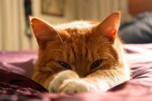 愛猫の健康をこまめにチェック