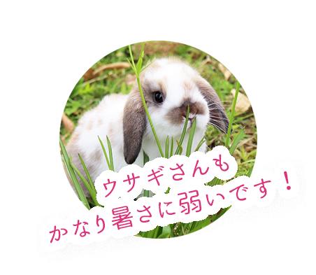 ウサギさんも暑さに弱い