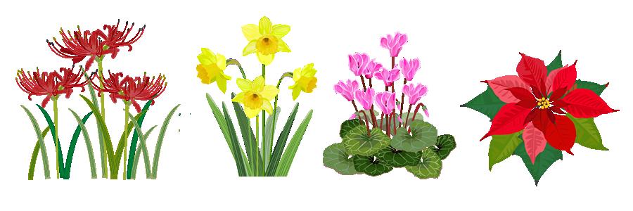 毒性の強い植物