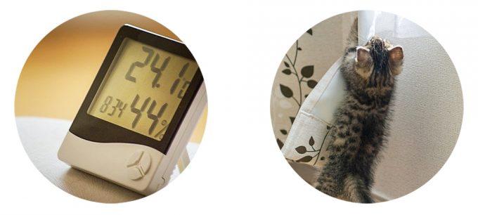 温度計・子猫