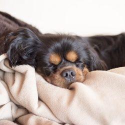 ベッドと犬